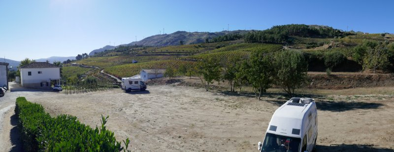P wijnboomgaard bij Tabuasço