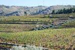 wijnboomgaard bij Tabuasço