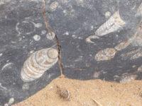 fossielen (Serdrar)
